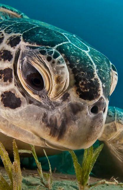 Green Turtle | Dmitry Marchenko
