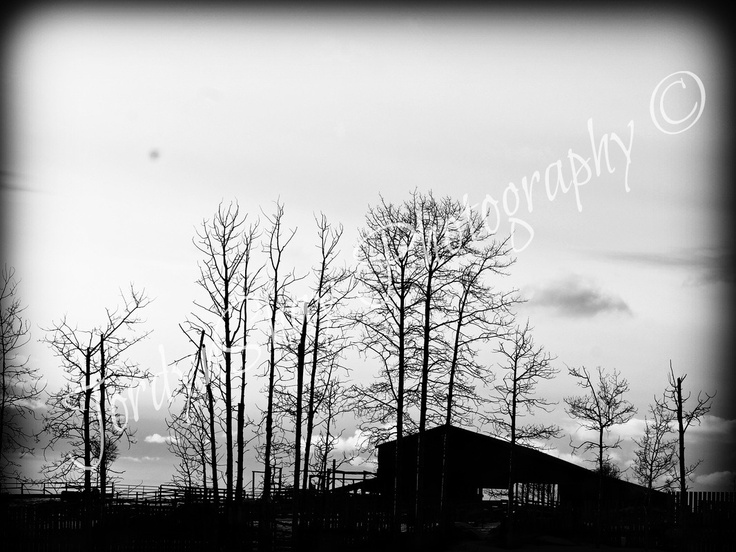 Sob Lake Road, Barn, Trees, Black and White, Winter, Vanderhoof, BC, Canada by JordynShay Photography