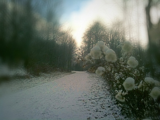 Wintery trail beside Lourdes