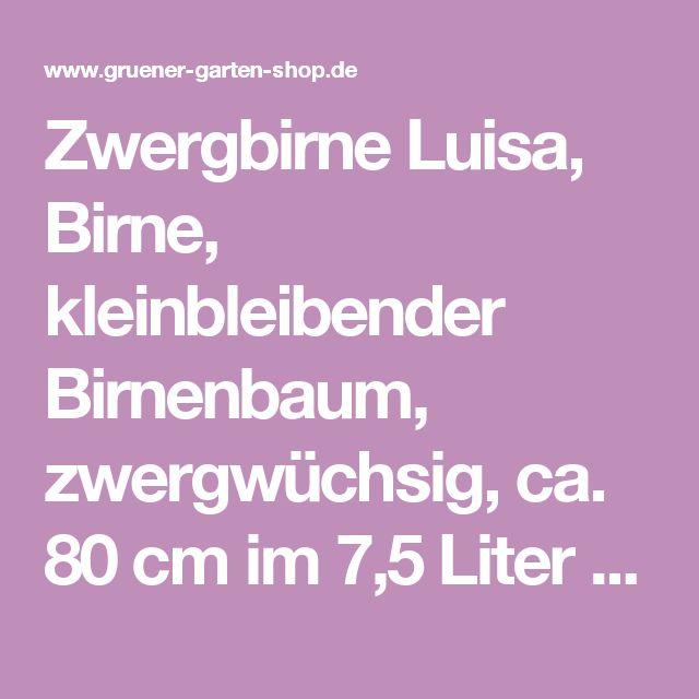 Zwergbirne Luisa, Birne, kleinbleibender Birnenbaum, zwergwüchsig, ca. 80 cm im 7,5 Liter Topf | Zwergbirne | Birnenbäume | Obstbäume | Grüner Garten Shop