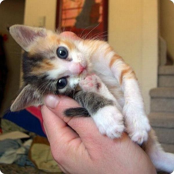 это фото с надписью люблю котиков продаже загородных домов