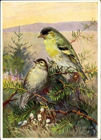 Künstler Ansichtskarte / Postkarte Schulz, R., Zeisig, Carduelis, Acanthis spinus