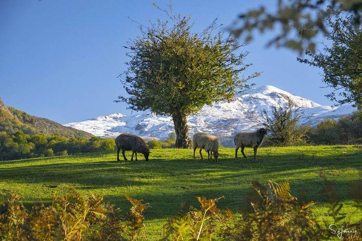 Mazandaran province Amol Sangchal IRAN Iran travel Dream vacations destinations Shiraz iran