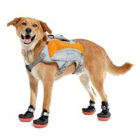 trail running dog outfit