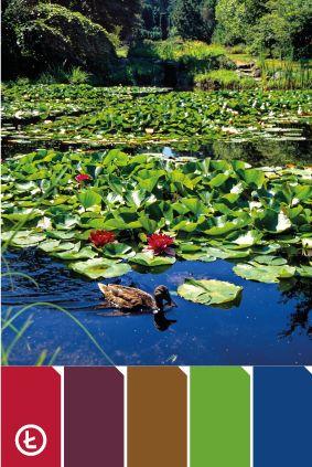 Lilie wodne #colours #palette #nenuphar #duck