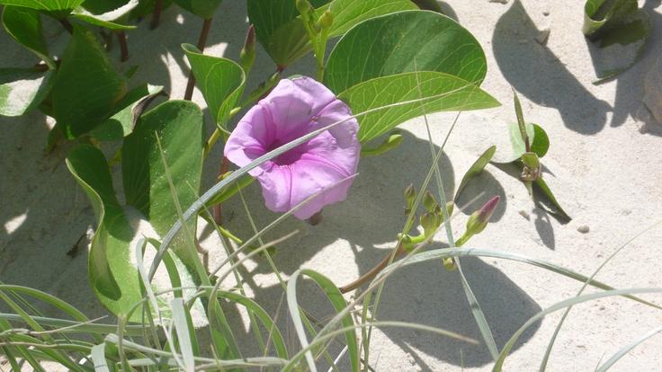 Explore the dunes at Currumbin Beach