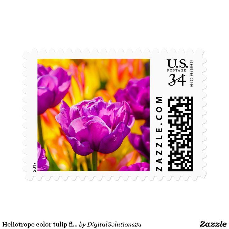 Heliotrope color tulip flowers postage