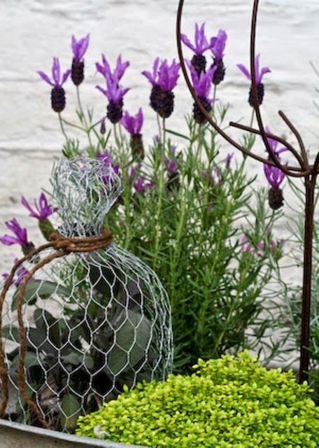 chicken wire garden cloche