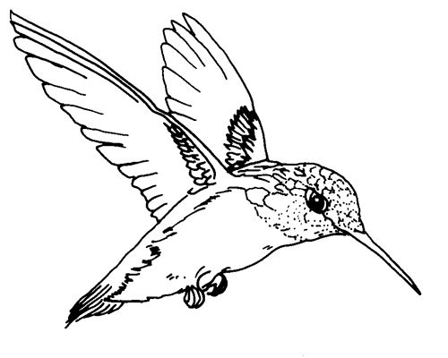 Ruby-throated hummingbird. This would make a great template for a metal cutout. Place a hole at the ends of the 2 wings and voila! - instant ornament!