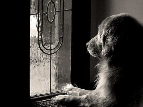 Pets are such beautiful soul's that can always bring such love. Here are nine quick tips for capturing their best.