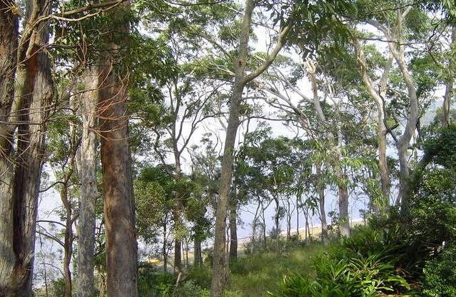 Smiths Lake Accommodation, NSW: Amaroo On The Waterfront, in Great Lakes for your #bushwalking holidays. There are many tracks in the near by National Parks. www.OzeHols.com.au/1