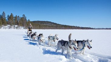 Tinja Myllykangas runs a sled dog safari business out of her cabin in the Finnish wilderness of Lapland.
