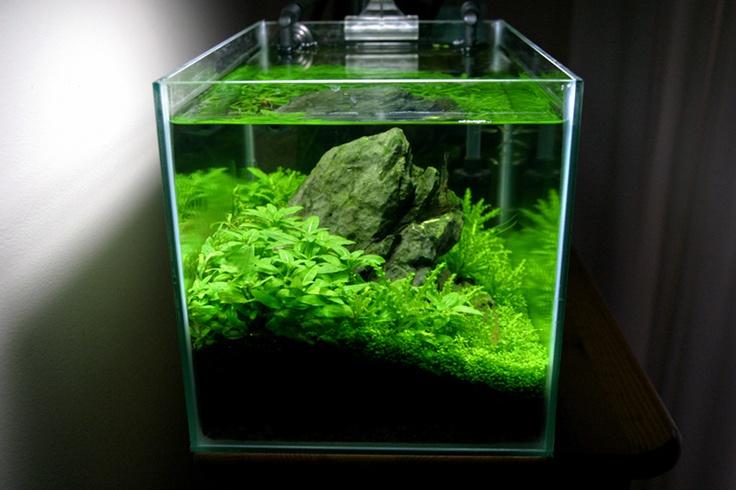cube garden #plantedaquarium #plantedtank #planted #aquarium # ...