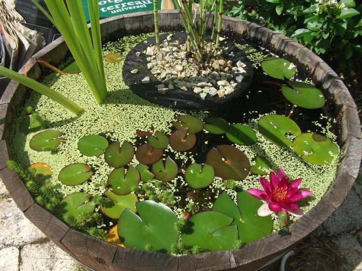 Awesome Whiskey barrel patio pond ideas They hold large aquatic plants and require less space than