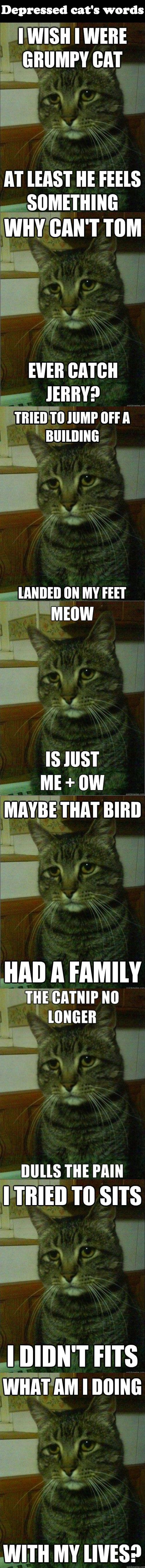 "Depressed cat's words make me sad. ""Me + ow""….now I'm depressed"