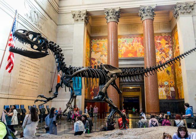 5d55ec070cb6a39adb85dfc5566bb757 - How Do I Get To The Museum Of Natural History
