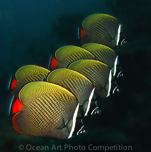 Butterflyfish by Leena Roy