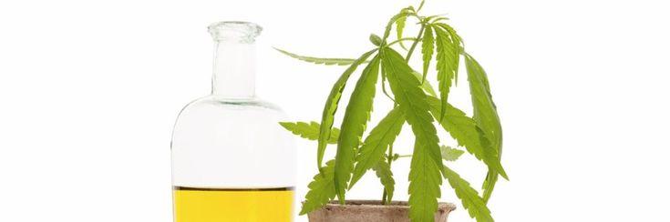 Primeur: cannabisolie gebruikt in ziekenhuis om 2 maanden oude baby te redden