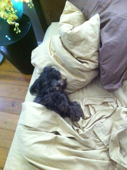 My Dog, Barkley...Sleeping in
