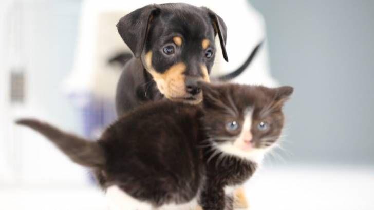 İlk Kez Köpüşlerle Bir Araya Gelen Sevimli Kedi Yavruları http://goster.co/ilk-kez-kopuslerle-bir-araya-gelen-sevimli-kedi-yavrulari