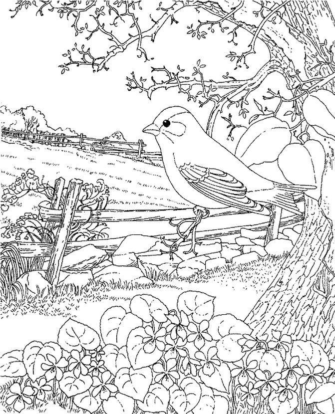 coloriage adulte hirondelle au printemps