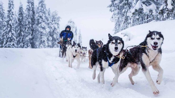 Fins Lapland is dé plek voor een ultieme vakantie: Sleeën achter husky's, worstjes grillen midden in een wondere witte wereld. Bekijk onze tips!