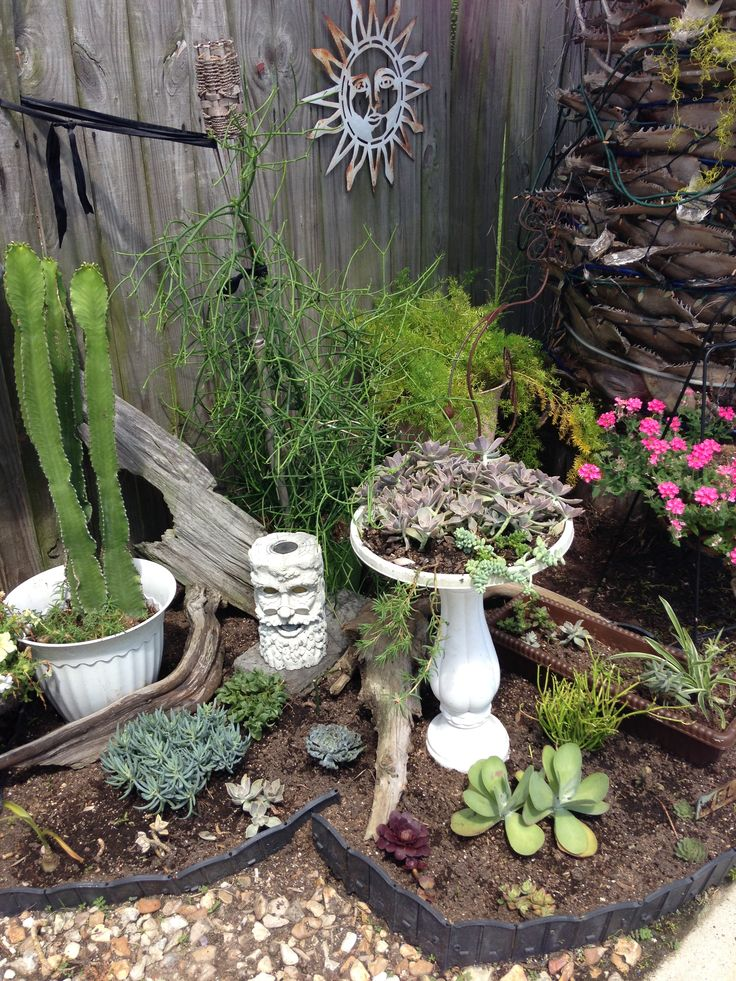 images about Succulent Gardens on Pinterest
