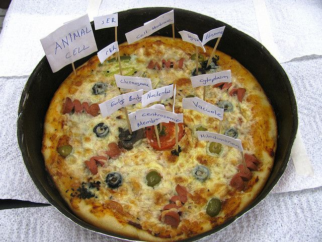 EDIBLE CELL PROJECT ~ PIZZA by Florida Science, via Flickr