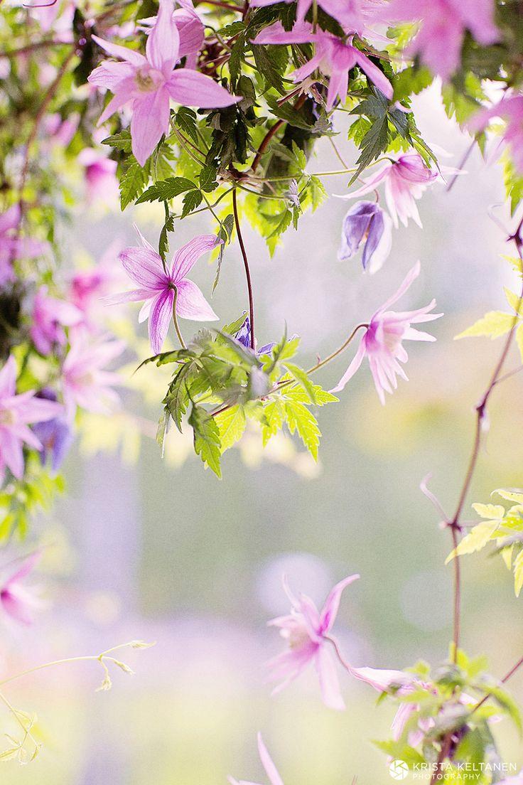 Lovely garden... Puutarha