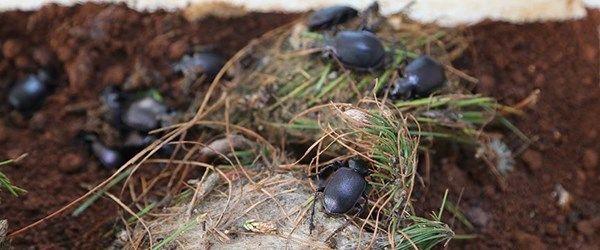 'Avcı böcekler' binlerce hektar ormanı kurtardı