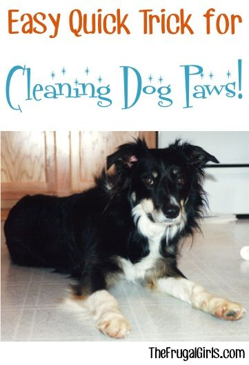 On the hunt for a Quick and Easy Trick for Cleaning Dog Paws? This simple little trick works like a charm! | TheFrugalGirls.com