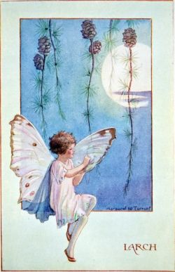 Larch - Flower Fairies book by Marion St John Webb, 1923