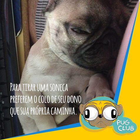#pugclub #puglife #pug #puglove #clubpug #pugclubinternacional #pugs #pugsrequest #pugstuff #pugsrock #pugsofinstagran #pugsloversclub #pugsforinstagram #pugstgram #pugsnotdrugs #pugstar #pugsofinsta #pugswag #pugstagram #pugsmile #pugshot #pugslover #pugselfie #pugsessed #pugso