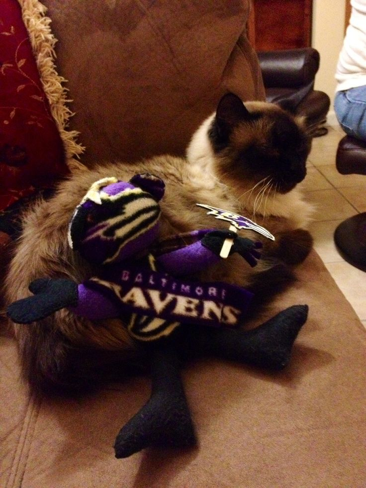 Our Rudy's a die hard Baltimore Ravens fan!