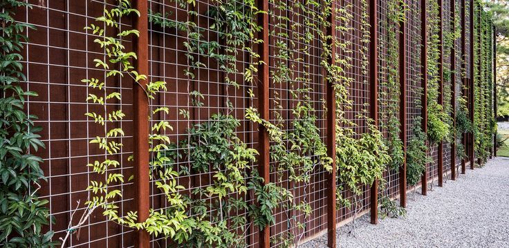 Hogwire fencing with steel panel behind it, grow vines up