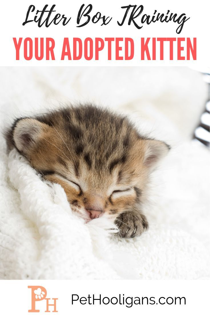 Litter Box Training Your Adopted Kitten In 2020 Kittens Feeding Kittens Training A Kitten