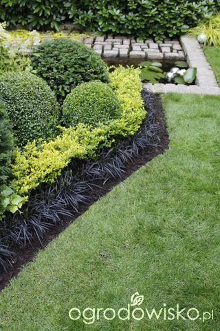 Wizytówka - Ogród nie tylko bukszpanowy - strona 2 - Forum ogrodnicze - Ogrodowisko