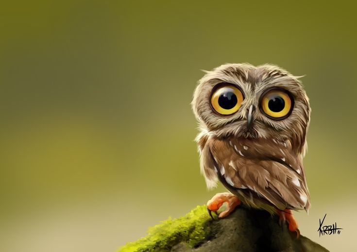 Tiny owl photo by KenRobertHansen In Caricatures   Owls ...
