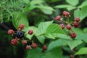 Skogsskafferiet - ätliga växter i naturen månad för månad, användningsområde och massa tips