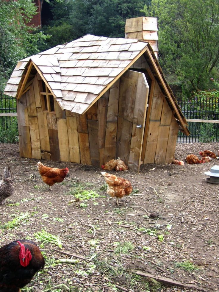 Broiler House Design For Sale: Unique Chicken Coops - Google Search