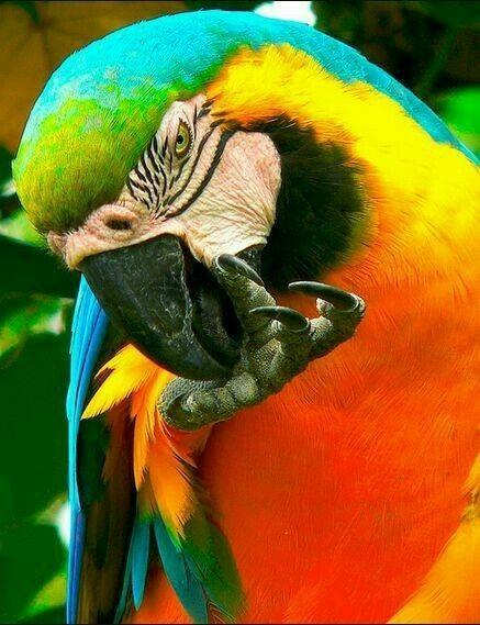 Pin By Macarena Basualdo On Macaws Pet Birds Parrot Beautiful Birds