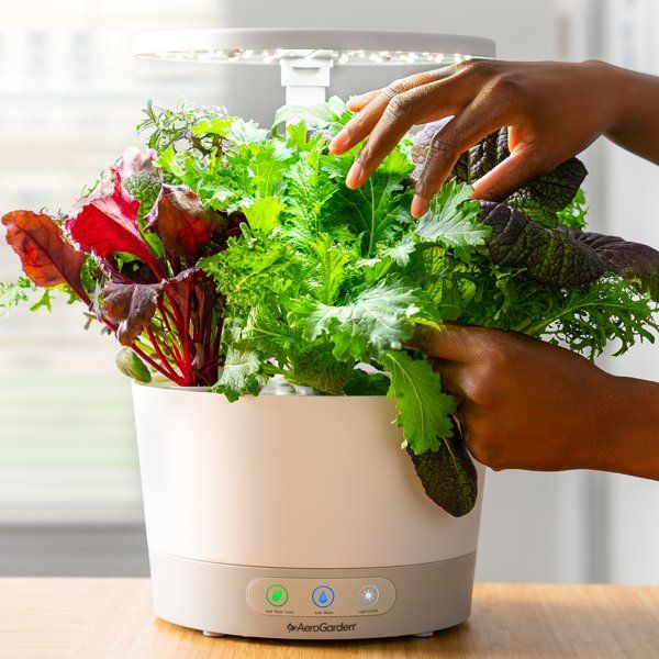 How To Grow Lettuce Indoors Growing Lettuce Indoors 640 x 480