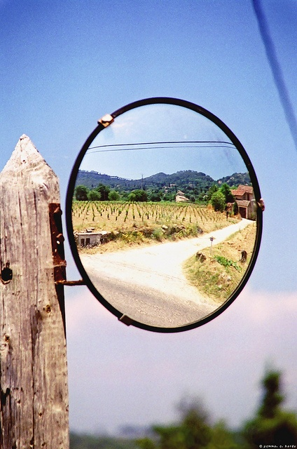 Vineyard Reflection, Provence.