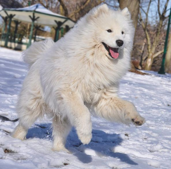 Kitchener Dog Park Rules