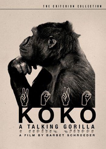 Koko, a talking gorilla with sign language