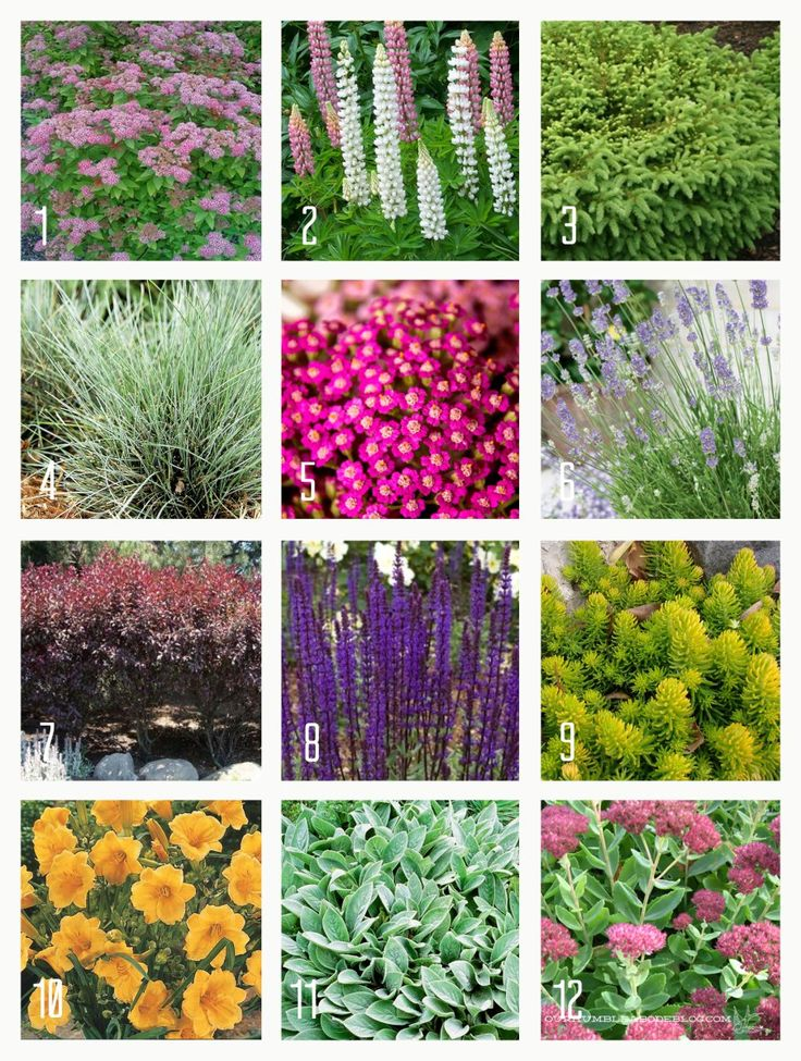 Best 20 Full sun plants ideas on Pinterest Full sun landscaping