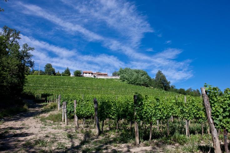 The Puiatti vineyards in Ruttars
