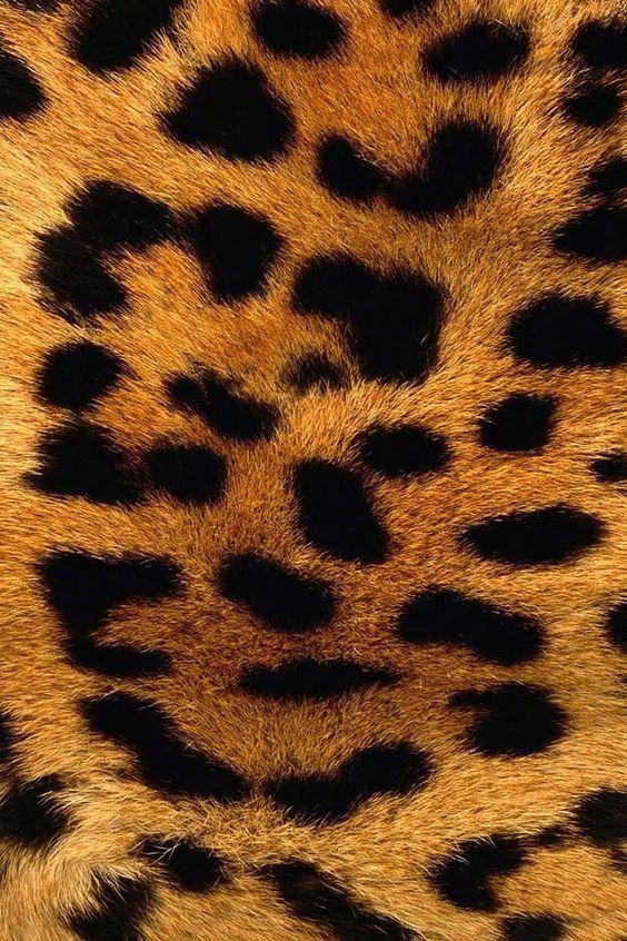 die besten 25 leopardenmuster tapete ideen auf pinterest leopard tapete leopardwand und. Black Bedroom Furniture Sets. Home Design Ideas