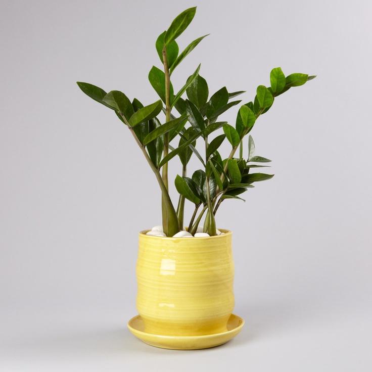 13 best pflanzen f r dunkle ecken images on pinterest. Black Bedroom Furniture Sets. Home Design Ideas