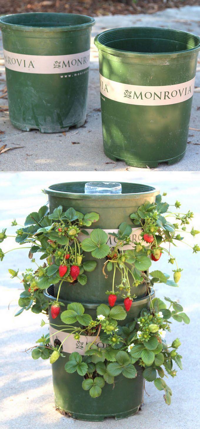 Best 25 tower garden ideas on pinterest garden tower diy grow tower and hydroponic gardening - Garden tower vertical container garden ...